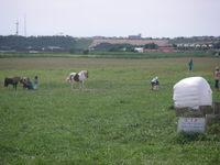 20070730_pony