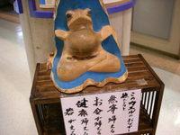 20080207_wakagaeru