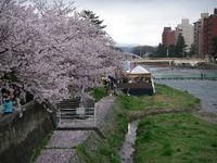 20080412_chiruchirusakura