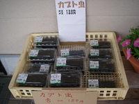 20080710_kabutonushi_150yen