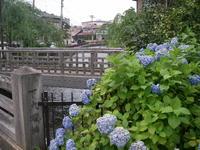 Kuratsukiyosui_asagao