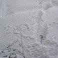 20080217_rakugaki_on_snow